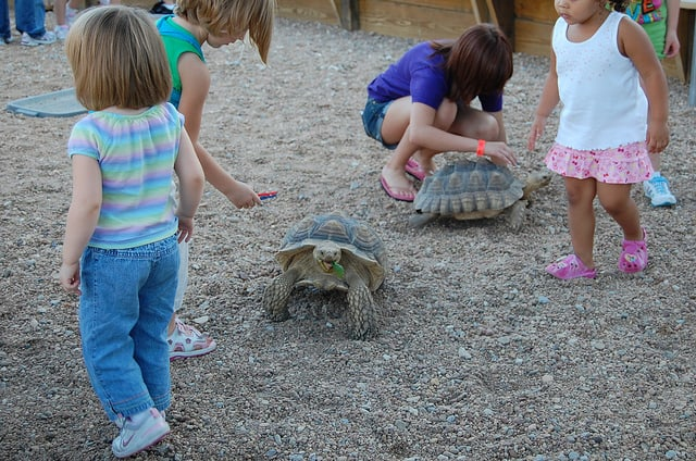 Kids in petting area with large turtles