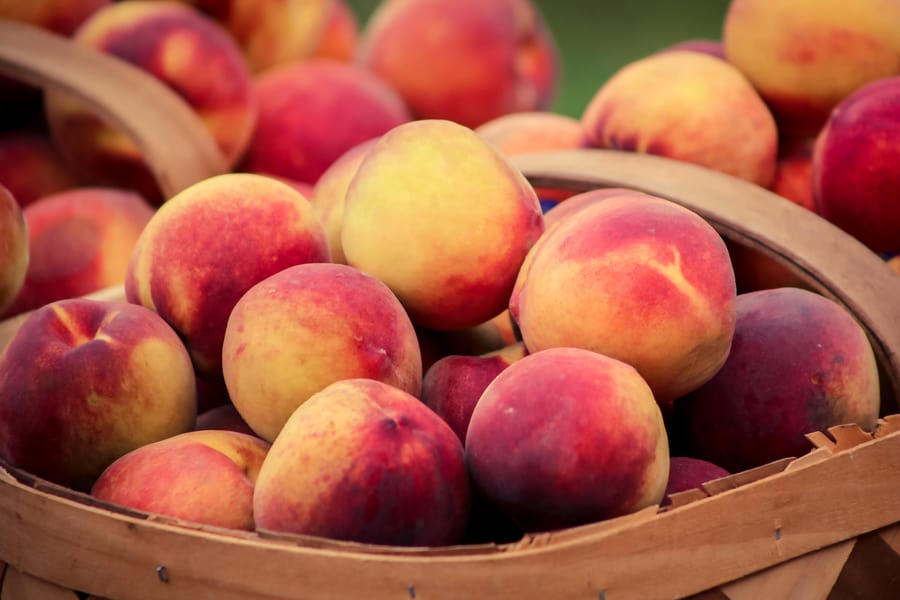 Peaches! you-pick places near Wichita KS