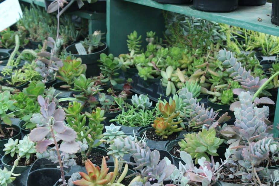 Succulents from Plant Kingdom Greenhouse in south Wichita