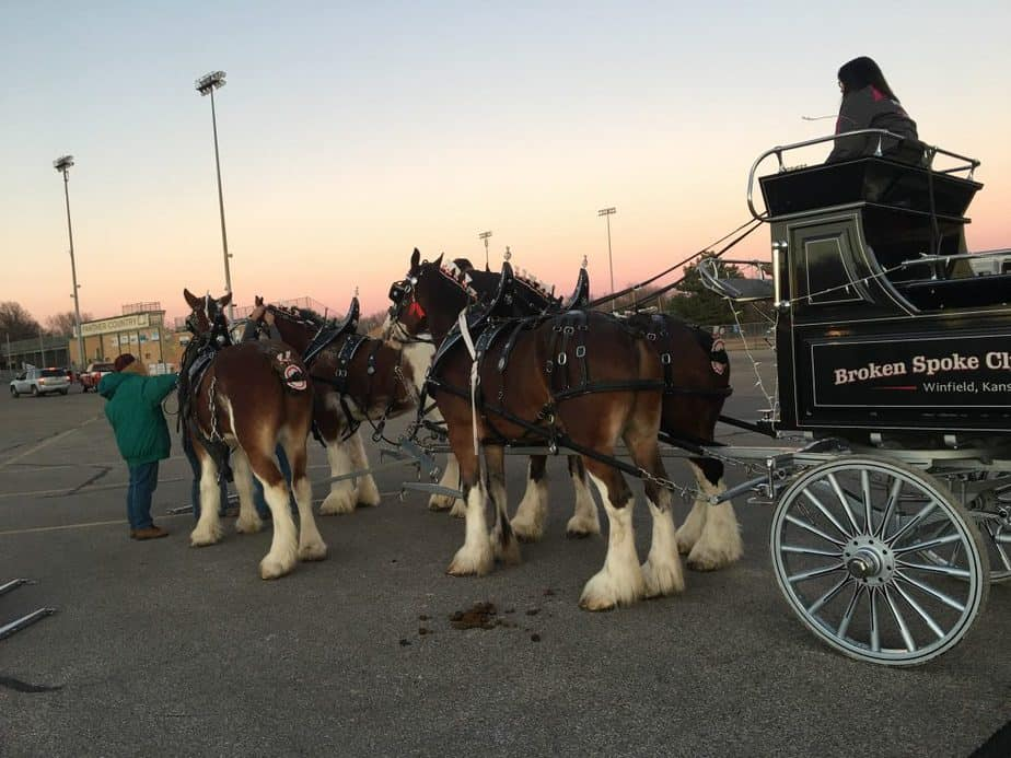 clydesdale team pulling a carriage - horse-drawn carriage in Wichita KS