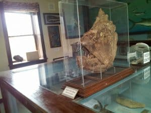 Fossil in glass case at Keystone Gallery
