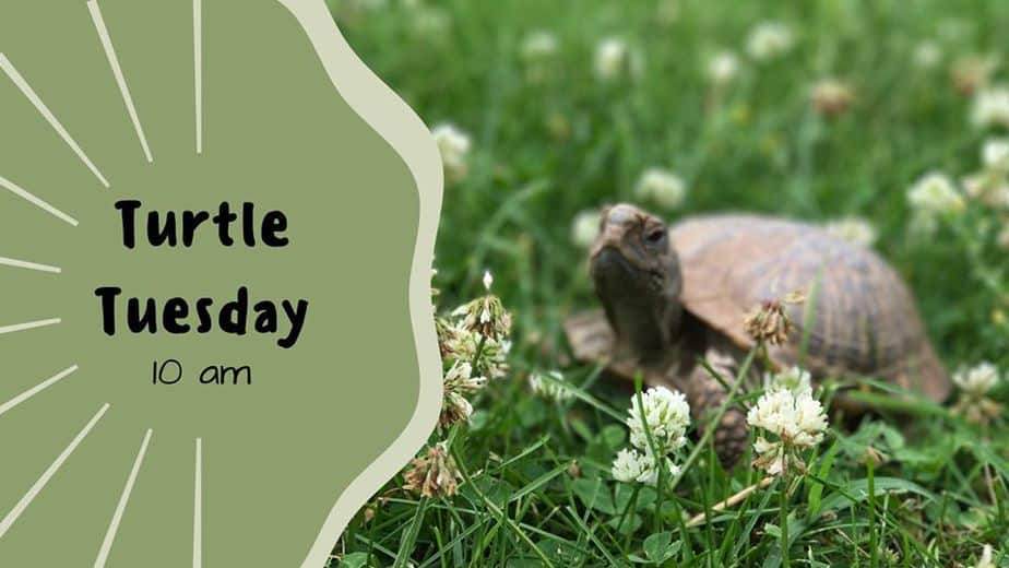 Learn about and feed the turtles every Tuesday morning at Great Plains Nature Center in Wichita